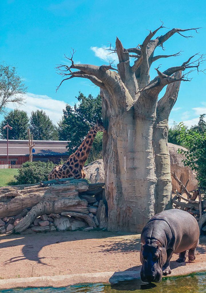 Glamping nel Bioparco: con Zoom Torino dormi in Africa